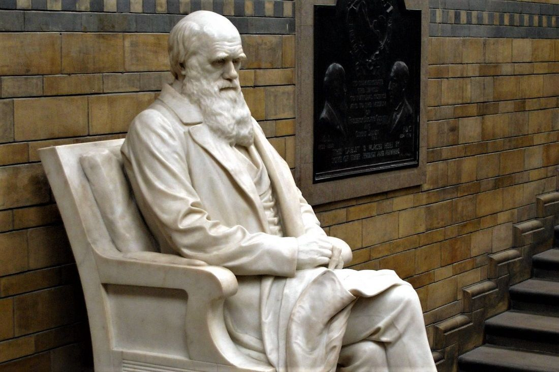 Does Darwinian Evolution Petrify God's Image?