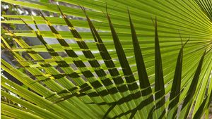 Denton Palm Sunday Crop