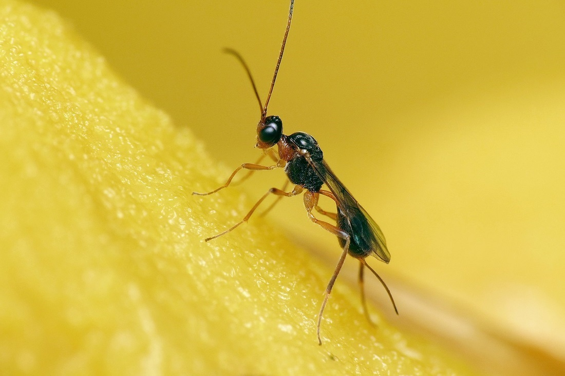 1920px Little Parastic Wasp On Rotten Mushroom 29454475675